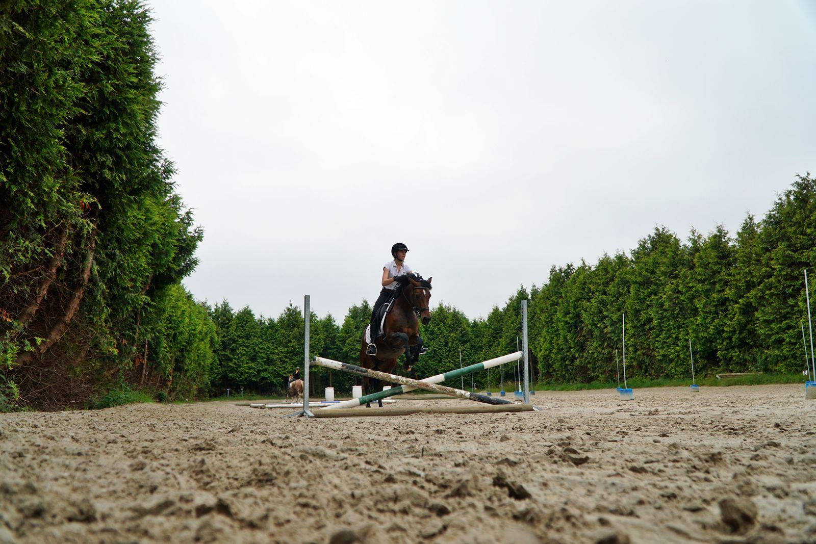 Sprung mit dem Pferd auf der Pianova Reitakademie