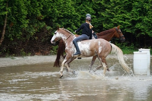 Mit dem Pferd durch das Wasser auf dem Reitplatz