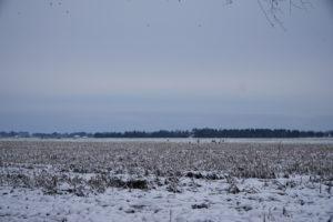 Winterlandschaft in Ostfriesland